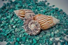 Een reeks verscheidene verschillende shells op groene stenen Stock Foto's