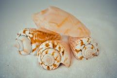 Een reeks verscheidene verschillende shells op een wit zand Royalty-vrije Stock Fotografie