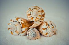 Een reeks verscheidene verschillende shells op een wit zand Royalty-vrije Stock Afbeelding