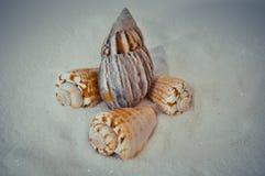 Een reeks verscheidene verschillende shells op een wit zand Royalty-vrije Stock Foto