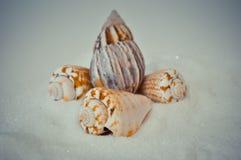 Een reeks verscheidene verschillende shells op een wit zand Stock Afbeelding