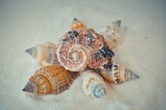 Een reeks verscheidene verschillende shells op een wit zand Stock Foto's