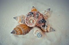 Een reeks verscheidene verschillende shells op een wit zand Stock Fotografie