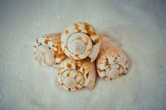 Een reeks verscheidene verschillende shells op een wit zand Royalty-vrije Stock Foto's