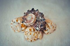 Een reeks verscheidene verschillende shells op een wit zand Stock Afbeeldingen