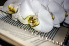 Een referentie in het boek - bloemen van witte orchideeën stock fotografie