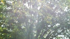 Een regendouche stock videobeelden