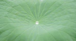 Een regendruppel is in het midden van blad stock afbeeldingen
