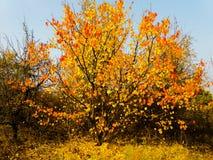 Een rel van kleuren stock foto