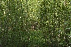 Een rem in de bomen royalty-vrije stock fotografie