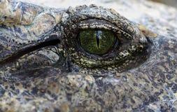 Een reptillian oog Stock Foto's