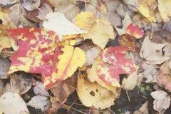 Een retro foto van de filmstijl van de herfst, daling, warm, de bladeren van New England gevallen op de rotsachtige grond van een Stock Foto's
