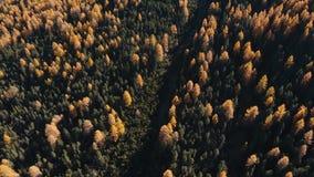 Een reusachtig bos in de herfst stock videobeelden