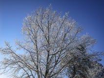 Een reusachtige de winter eiken boom in de sneeuw op blauwe hemel royalty-vrije stock afbeelding