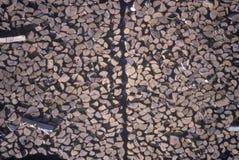 Een reusachtige stapel logboeken bij een timmerhoutmolen in Vermont Royalty-vrije Stock Foto's