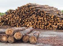 Een reusachtige stapel van logboeken van het bos, een zaagmolen, hout voor de uitvoer, straal royalty-vrije stock afbeelding