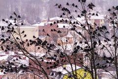Een reusachtige troep van kraaien zit op bomen tegen de achtergrond van wi Royalty-vrije Stock Afbeeldingen
