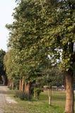 Een rij van bomenboomstam Stock Afbeeldingen