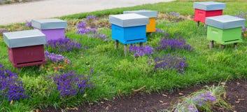 Een rij van gekleurde bijenbijenkorven op een gebied van bloemen stock fotografie