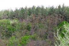 Een rij van groene bomen en struiken tegen een blauwe hemel stock afbeeldingen