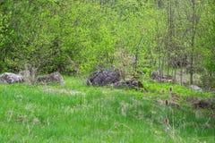 Een rij van groene bomen en struiken tegen een blauwe hemel stock foto