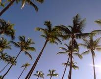 Een rij van palmen stock afbeeldingen