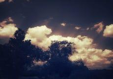 Een rij van witte wolken achter de bomen stock foto's