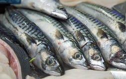 Een rij van zilveren vissen op verkoop in een winkel Royalty-vrije Stock Fotografie