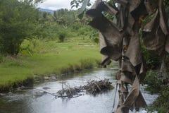 Een riverbank moest met bosbomen worden geplant Royalty-vrije Stock Afbeelding