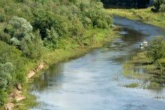 Een rivier dichtbij bos Stock Afbeelding