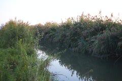 een rivier met gras naast op een zonnige dag stock afbeeldingen