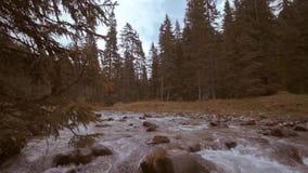 Een rivier stroomt onder de takken van de bomen van het bos en onder de keien van de bergen stock video