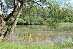 Een rivier in Wit-Rusland Stock Afbeelding