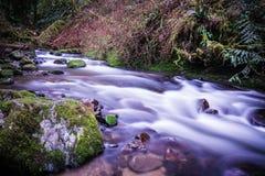 Een riviermening dichtbij McDowell valt, Oregon Stock Afbeelding