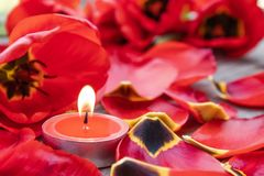 Een rode, brandende kaars brandt dichtbij de gevallen bloemblaadjes van rode tulpen De rode kaars brandt royalty-vrije stock foto's