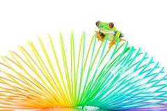 Een rode eyed boomkikker op een kleurrijk stuk speelgoed Royalty-vrije Stock Afbeeldingen