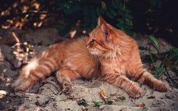 Een rode kat ligt op het strand Stock Foto