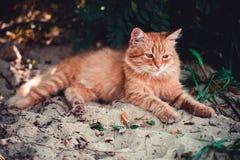 Een rode kat ligt op het strand Stock Foto's