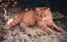 Een rode kat ligt op het strand Royalty-vrije Stock Foto's