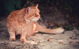 Een rode kat op het strand in de herfst Stock Afbeelding