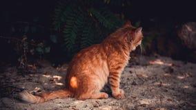 Een rode kat zit op het strand Stock Afbeeldingen