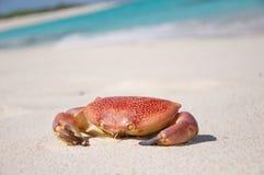 Een rode krab op het zand Stock Afbeeldingen