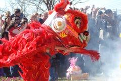 Een rode leeuw op Chinees Nieuwjaar Stock Afbeeldingen