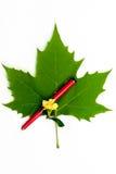 Een rode pen met groen blad Stock Foto