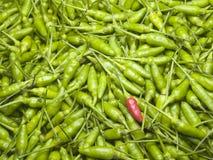 Een rode Spaanse peper in een Stapel van Groene Spaanse pepers Stock Foto's