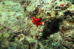 Een rode Sunstar Royalty-vrije Stock Foto's