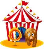 Een rode tent bij de rug van een beer en een vlammende ring Stock Foto