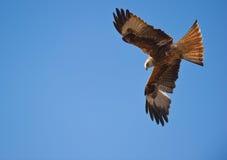 Een rode Vlieger, meester van de wind stock afbeelding
