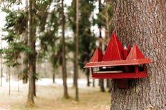 Een rode vogel en eekhoornvoeder royalty-vrije stock afbeelding