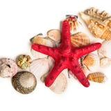 Een rode zeester en zeeschelpen die op zand liggen Royalty-vrije Stock Afbeeldingen